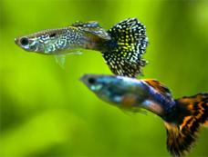 물고기 이미지